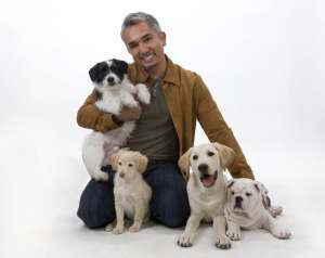 怎么样教狗狗定点排便呢