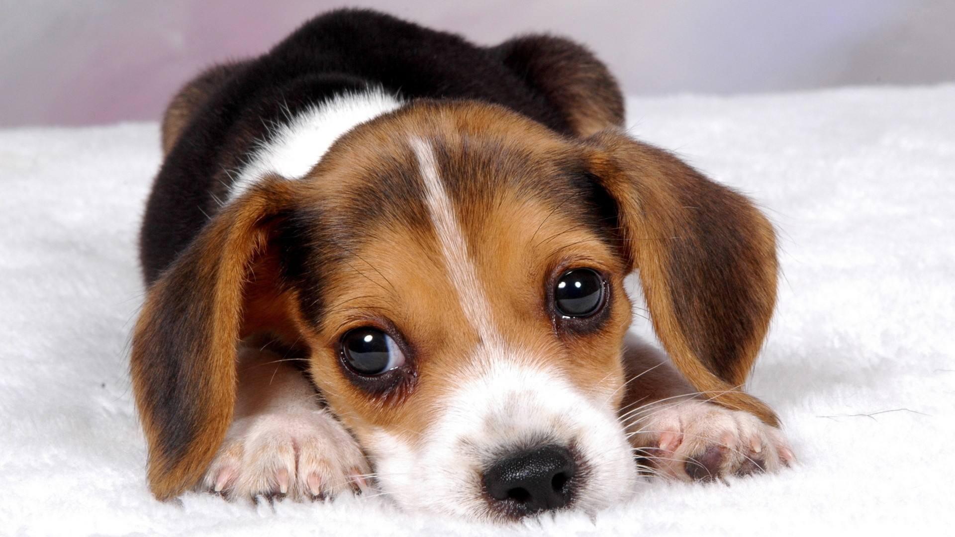 阿拉斯加犬拉肚子怎么治疗?
